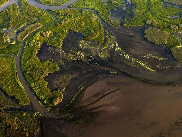 Largest ecosystem restoration project in U.S. history provides model for climate adaptation | Growing Returns